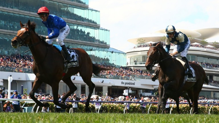 Cross Counter: beat Marmelo in the Melbourne Cup