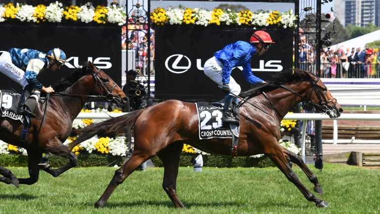 Marmelo (left) chases home Cross Counter in the Melbourne Cup