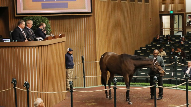 Homeland Security in the Keeneland sales ring