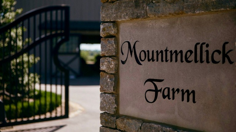 Mountmellick Farm has increased the size of its broodmare band to 12 in recent days