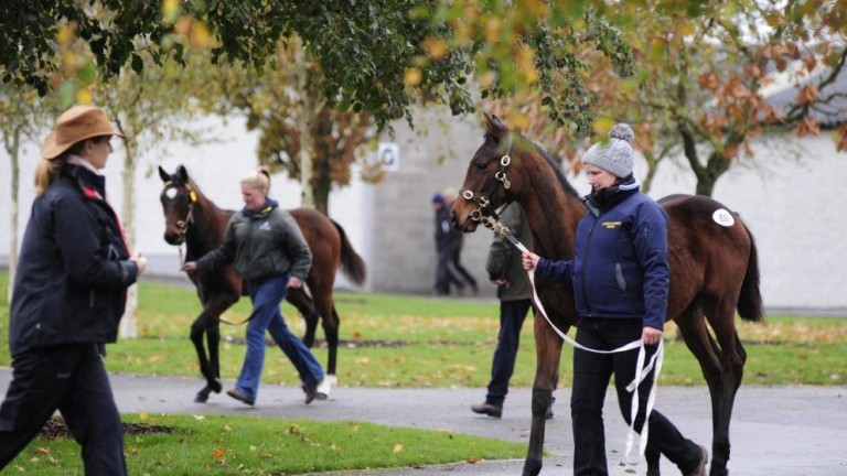 Other first-crop sires represented at Fairyhouse include Buratino, Coulsty and Mehmas