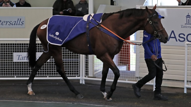 Zeelander: sale-topper will head to Dubai where he will be trained by Helal Al Alawi