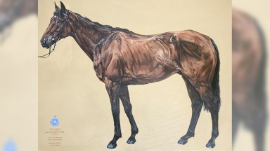A one-off portrait of Cue Card, by renowned equestrian artist Tania Still, will go up for sale as part of the Countryside Alliance's Countryside Day auction at Cheltenham Racecourse next Friday.