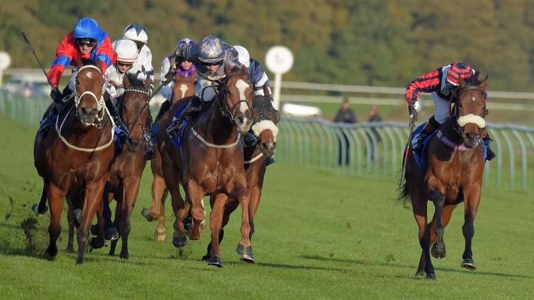 Coiste Bodhar (right) will be having his 100th start on Monday