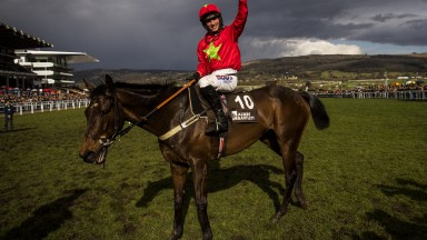 Ffos Las novice chase winner Kilbricken Storm after his Albert Bartlett Novice Hurdle win at Cheltenham in March