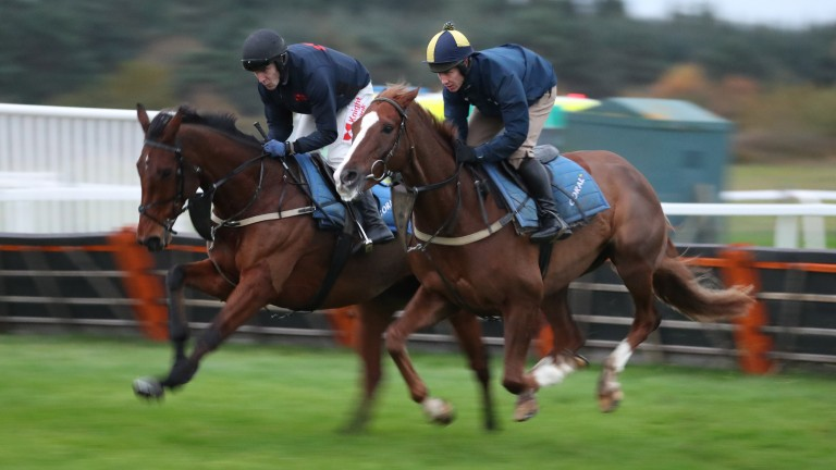 Thistlecrack (left) and Native River: both Gold Cup contenders will be suited by more rain says trainer Colin Tizzard