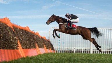 Mr Whipped: Grade 2-winning hurdler makes his chasing debut at Cheltenham
