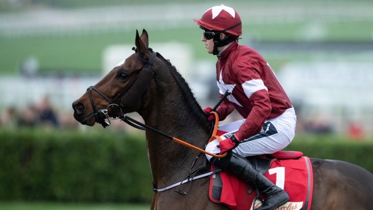 Tiger Roll: will warm up for Cheltenham's Cross-Country chase in the Boyne Hurdle