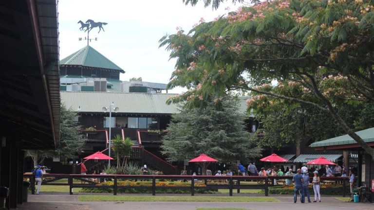 The sales ring at Karaka, where the NZB Ready To Run Sale was held this week
