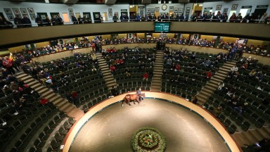 Goffs: day two of the November Foal Sale takes place on Tuesday
