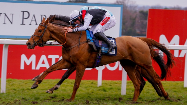 Queenohearts: dual Listed winner can add a Grade 2 to her tally