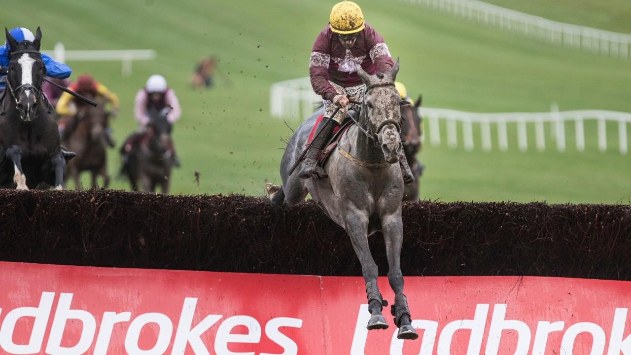 Image result for Tout Est Permis horse