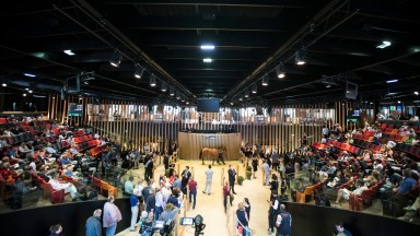 Arqana: the Deauville sales complex will host the two-part Issam Fares dispersal