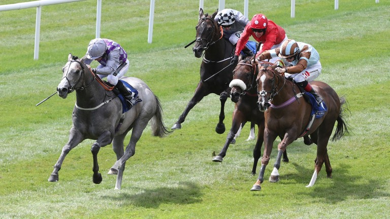 Havana Grey (left): the Group 1-winning son of Havana Gold will be sent 30 mares by Whitsbury Manor Stud