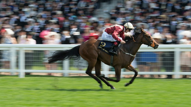 Heartache: the Queen Mary Stakes winner will be offered by Whitsbury Manor Stud at the December Mares Sale