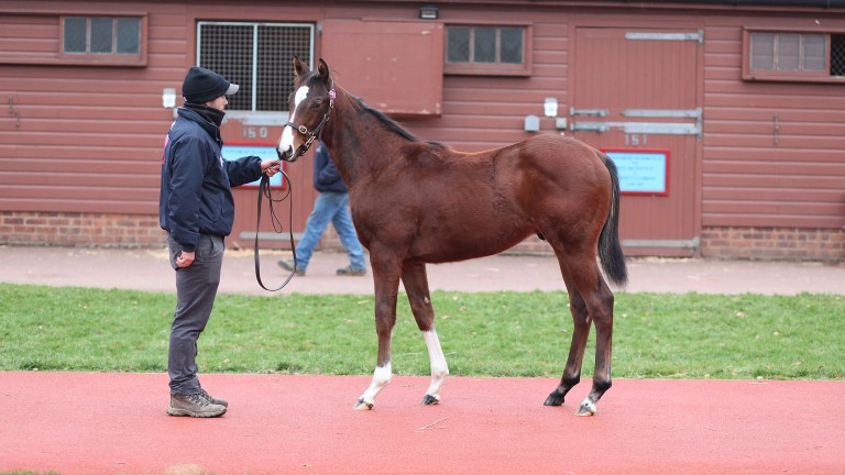 Lot 885: the Adaay half-brother to Heartache