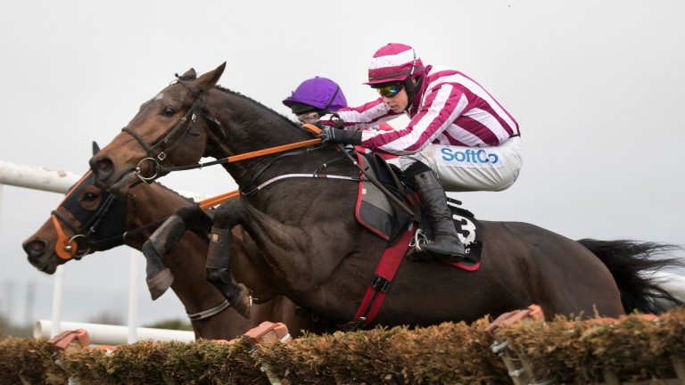 Coeur Sublime: will try and advertise his Triumph Hurdle claims
