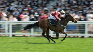 Heartache: the Queen Mary Stakes winner was secured by Coolmore's MV Magnier for 1,300,000gns