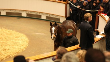 Pearling: a packed Park Paddocks ring looks on as the daughter of Storm Cat brings 2,400,000gns