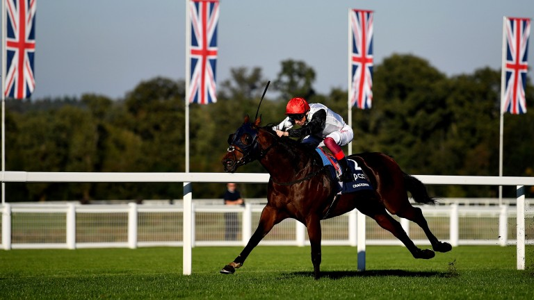 Pivotal is the broodmare sire of top-class racehorses such as Cracksman