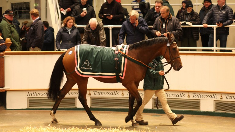 Weekday in the Tattersalls ring before being knocked down to Tanya Gunther at 400,000gns