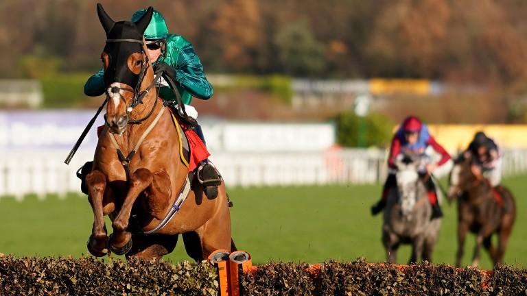 Torpillo: not certain to run at Cheltenham