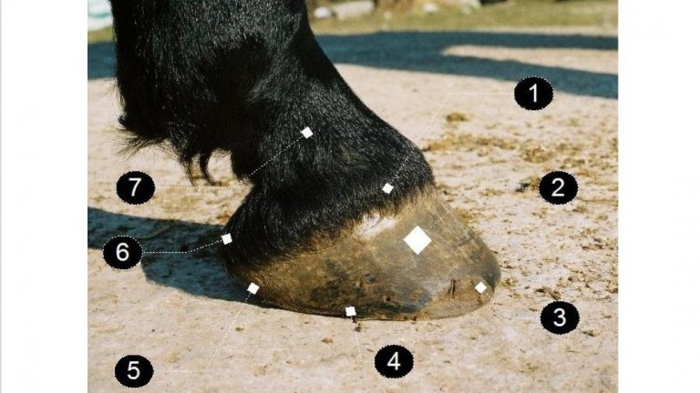 Number 6 shows where a horse's heel bulbs are - there are two, one on each side