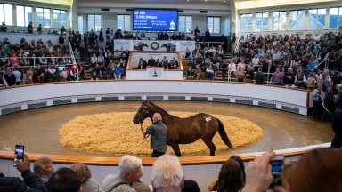 Lot 325 a colt by Dubawi x Dar Re Mi sells for 3.5m Guineas to David Redvers Pic: Edward Whitaker
