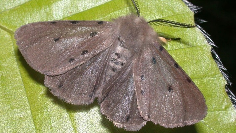 Moths have proved to be a problem for US race-caller Peter Berry