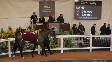 Chantry House in the Cheltenham sales ring before bringing £295,000 from Michael Hyde