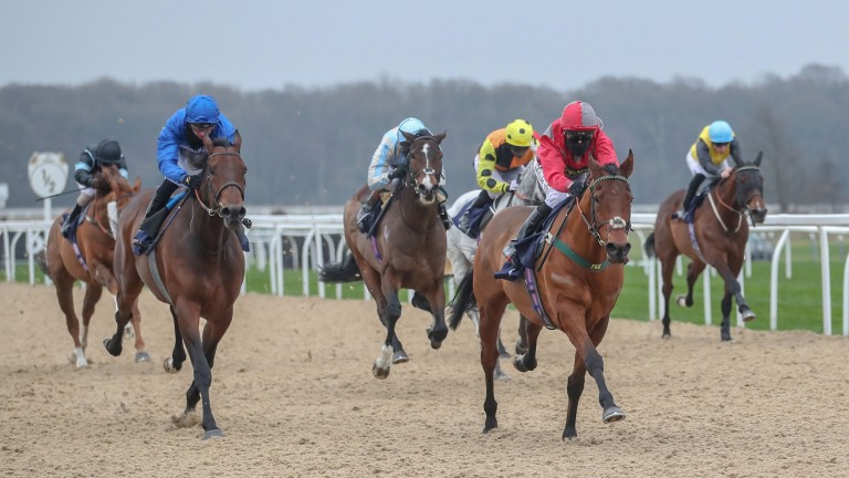 Stargazer (red sleeves) wins the All-Weather Championships fast track qualifier at Newcastle last Saturday under Robert Winston