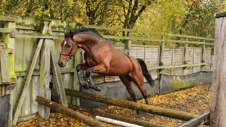 Loose schooling is an excellent tool in the education of young jumpers