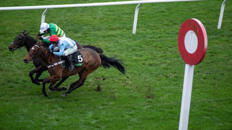 Verdana Blue gets up on the line to beat Buveur D'Air in last year's Christmas Hurdle