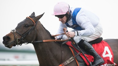 Waiting Patiently: is a potential runner at the Dublin Racing Festival at Leopardstown
