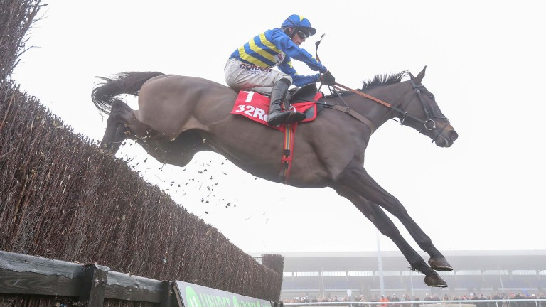 Dynamite Dollars: ruled out of the Racing Post Arkle