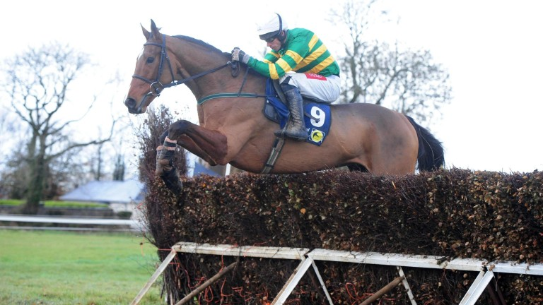 Stand Up And Fight: might not be ready for the hustle and bustle of Cheltenham, according to Enda Bolger