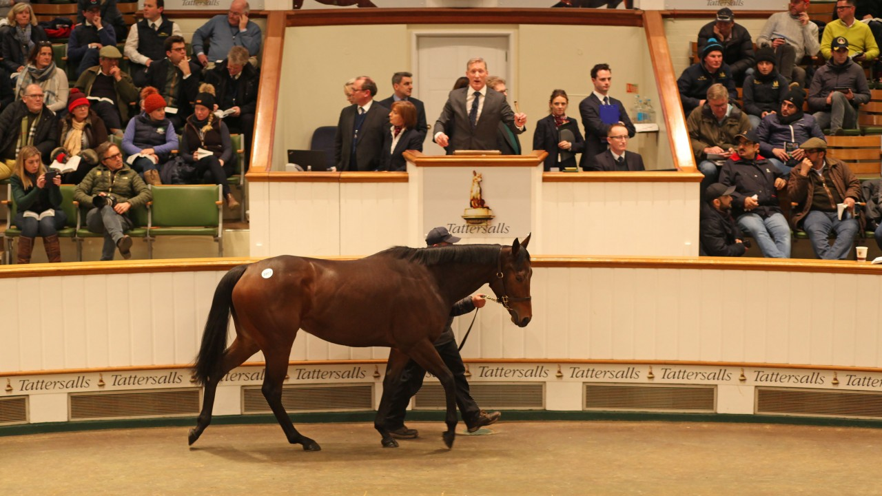 five of the most stunning horse trades from the 2018 sales circuit