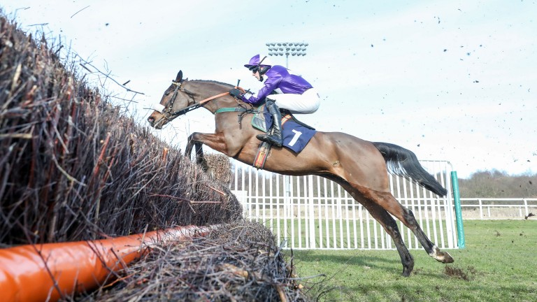 Lady Buttons: Listed winner at Doncaster on Saturday could be aimed at the Champion Chase