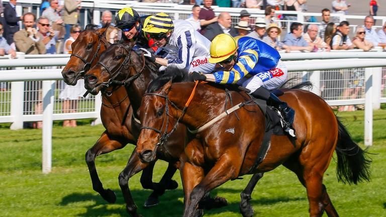 Gracious John (right) was victorious at Newbury last April