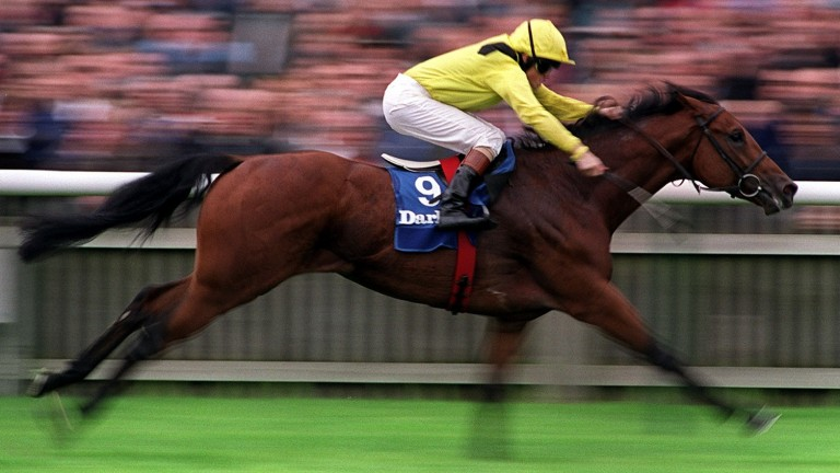 Tobougg: son of Barathea ran out a comfortable winner of the Dewhurst at two