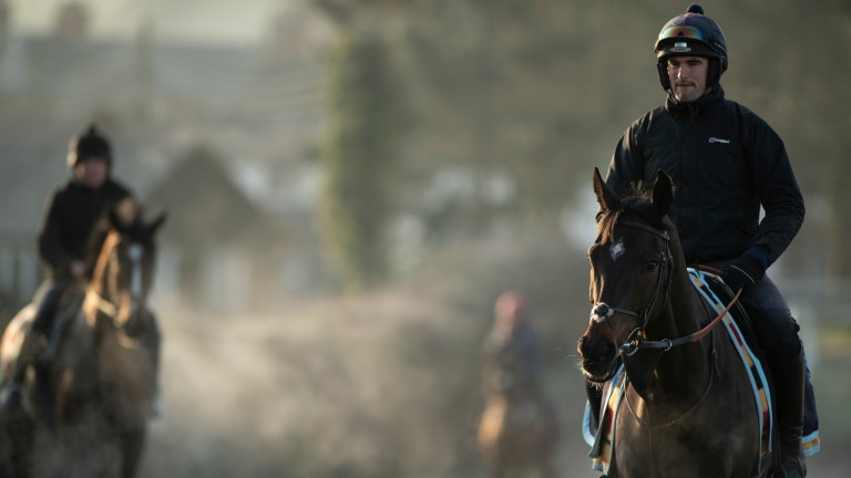 Altior walks to the gallops under assistant trainer Toby Lawes
