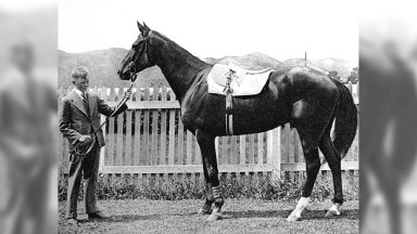 """The great race horse """" Phar Lap"""", who won 37 out of the 51 races he competed in and died mysterously."""