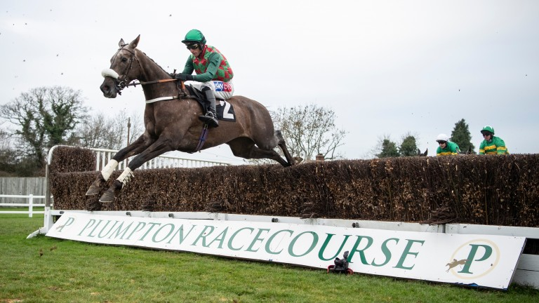 Guillaume Macaire's Master Dino won at Plumpton last year