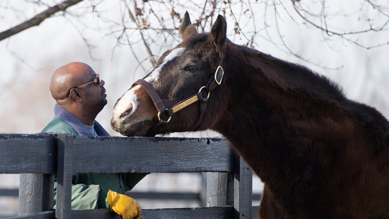 Breed-shaping sire and Horse of the Year A.P. Indy dies in Kentucky at 31