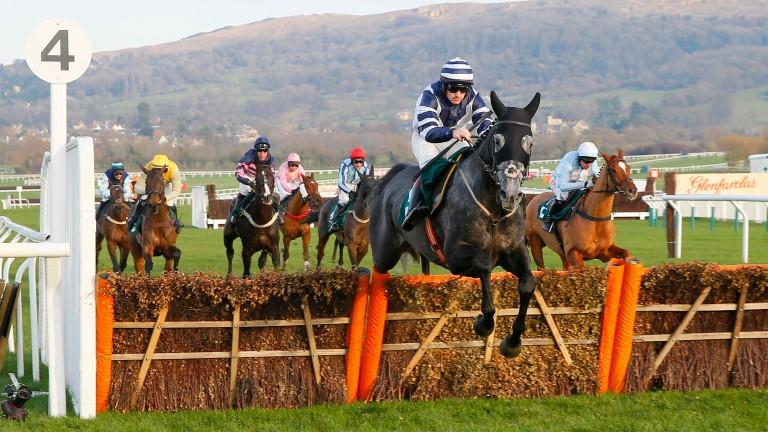 Al Dancer: was a big ante-post gamble for the Betfair Hurdle