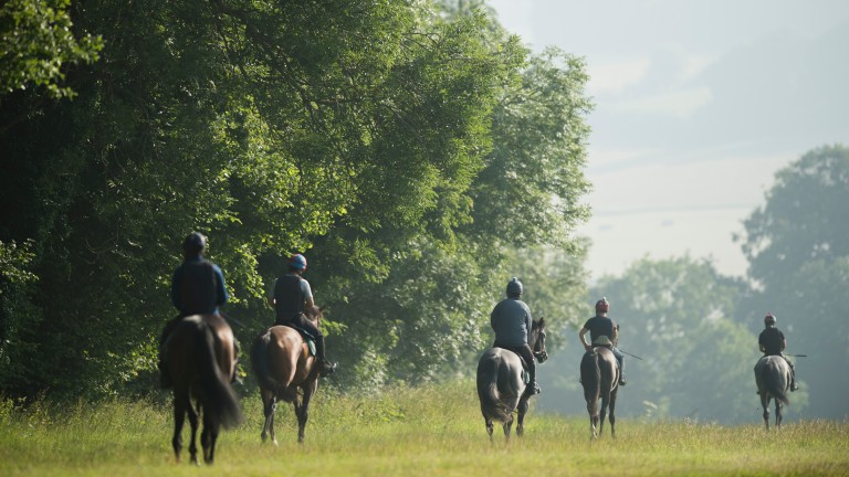 Many members of stable staff are recruited from the EU and beyond