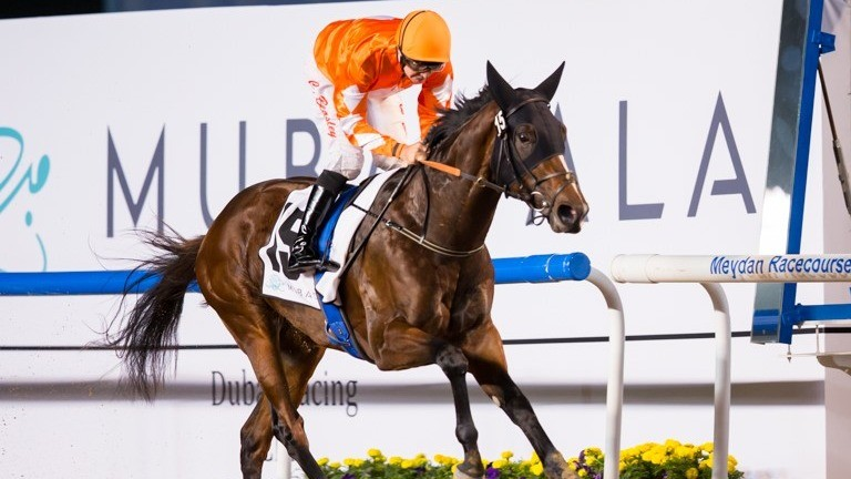 Walking Thunder: an easy winner of the UAE 2000 Guineas Trial