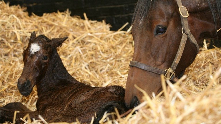 The Galileo filly out of Midday who has now been named Meridiana