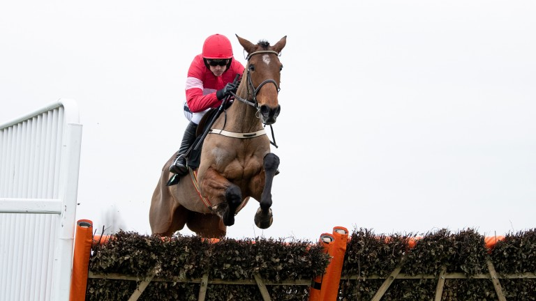 Laurina: winner of the mares' novices' hurdle at Cheltenham