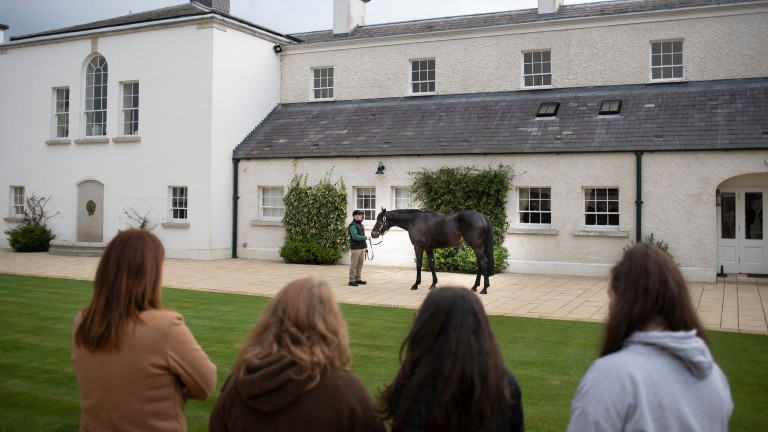 Dual Derby winner Harzand poses for visitors to the Aga Khan's Gilltown Stud